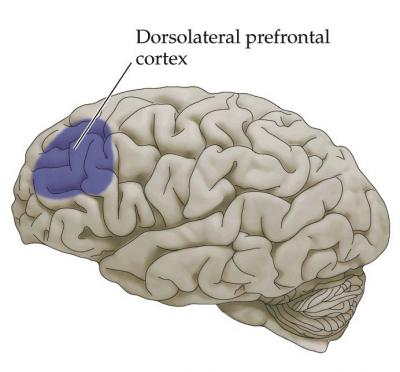 The Dorso-Lateral Prefrontal-Cortex and Lucid Dreaming - The Lucid ...