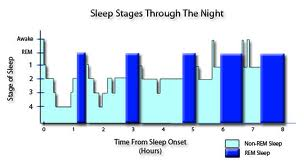 Sleep Stages Through Night